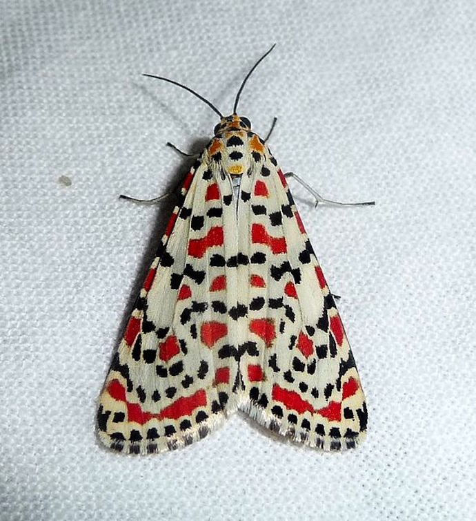 mot-patroon-vleugels-1