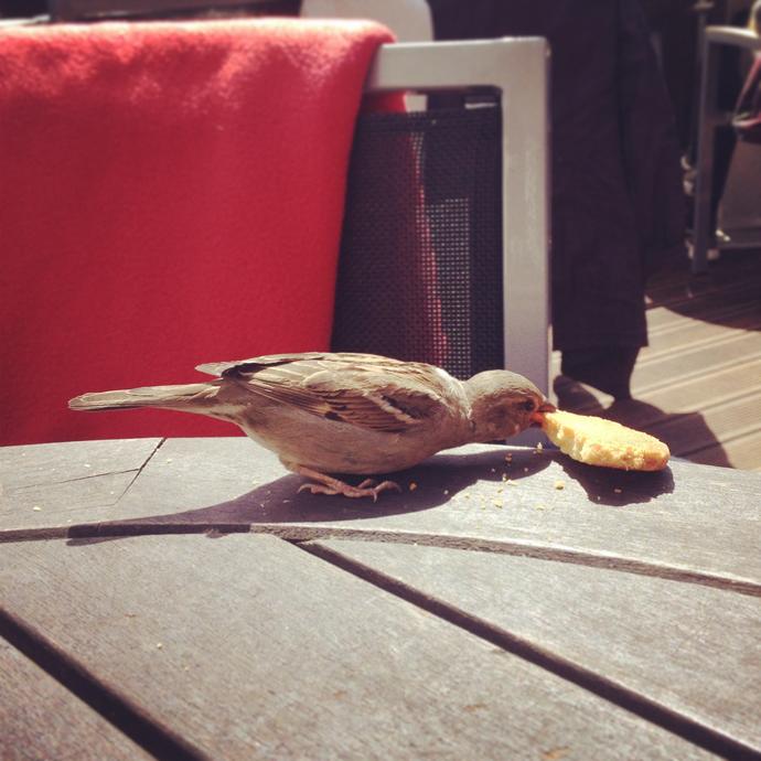 musje koekje terras