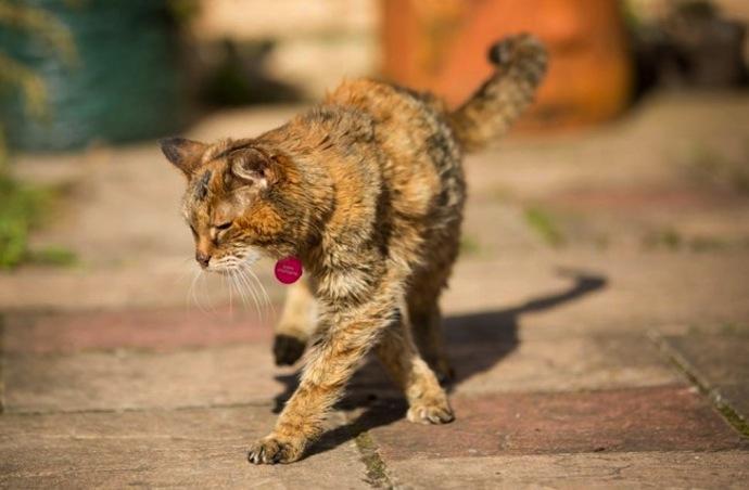 oudste_kat_ter_wereld_1