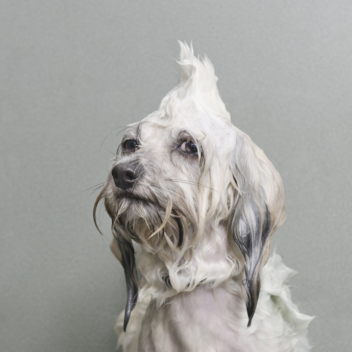 sophie_gamand_wet_dog_1