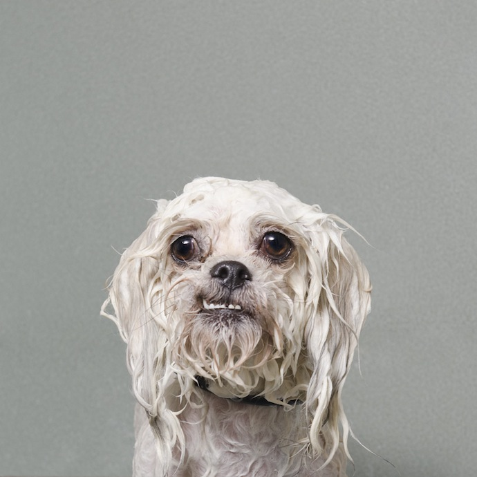 sophie_gamand_wet_dog_3