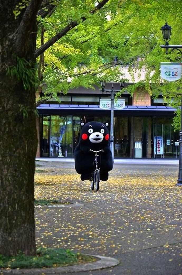 bear_bike_fluffy