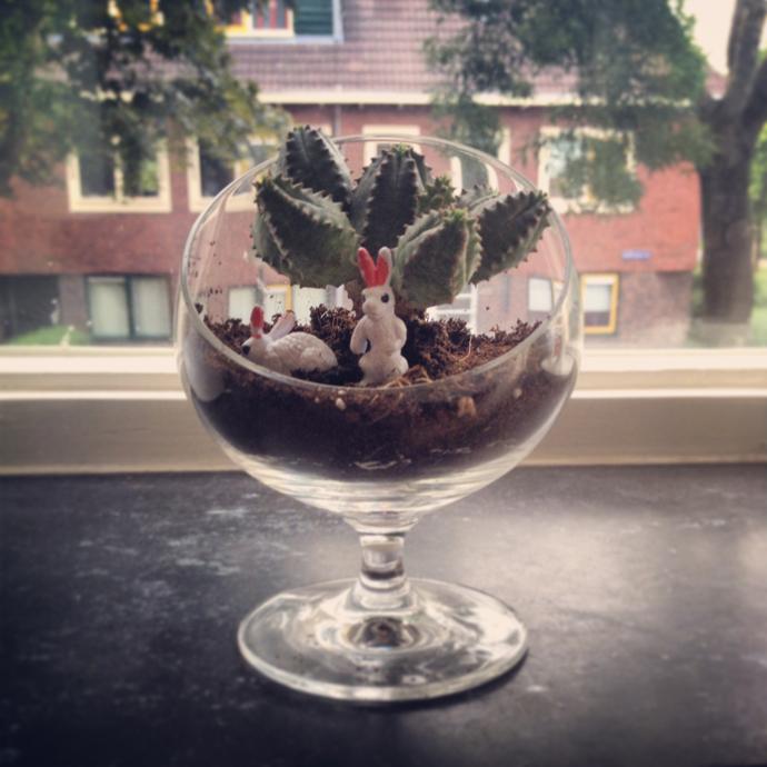 creatief met cactus