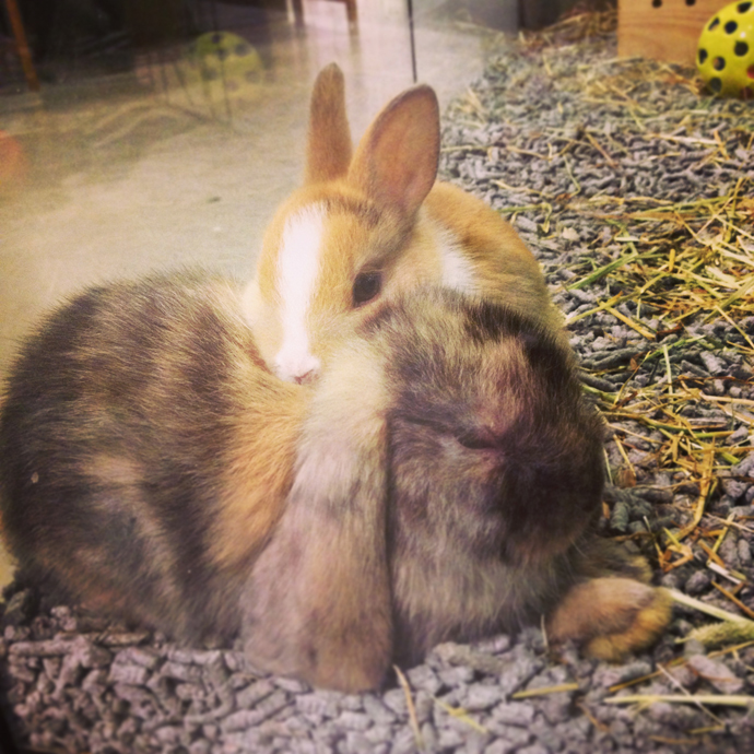 schattige konijntjes