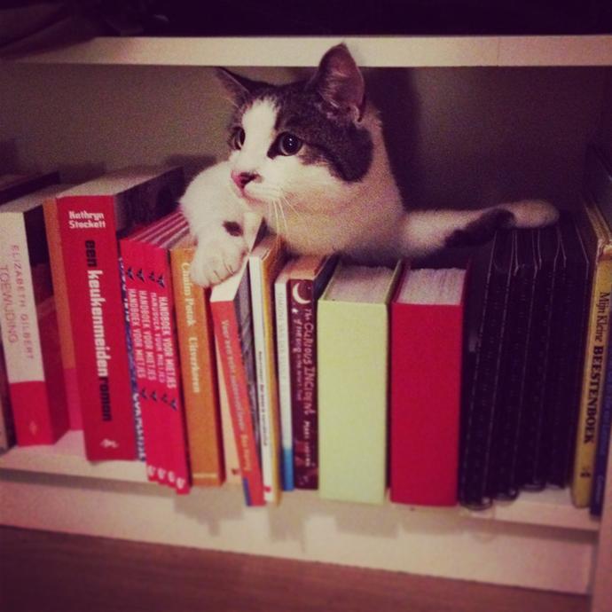 tetkees boekenkast