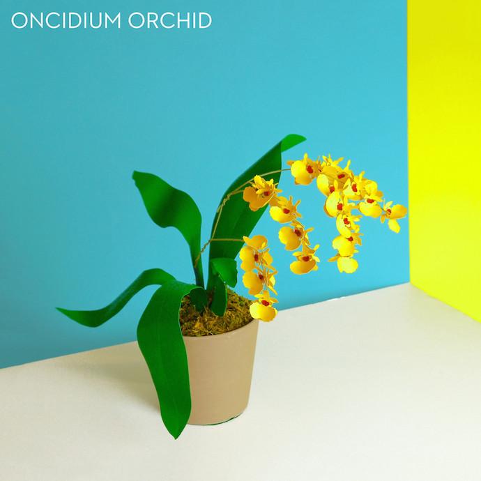 paper plants 2