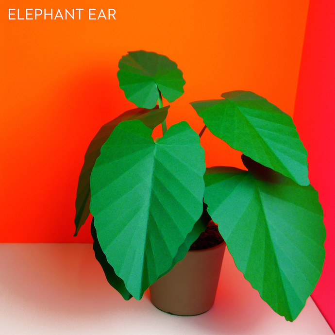 paper plants 3