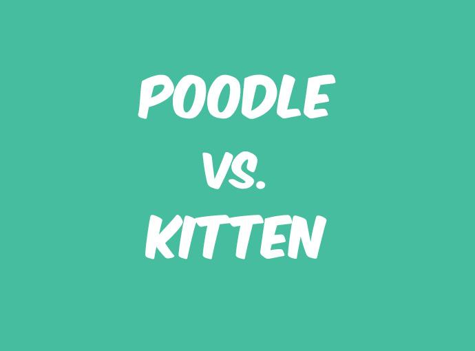 poodle&kittensss