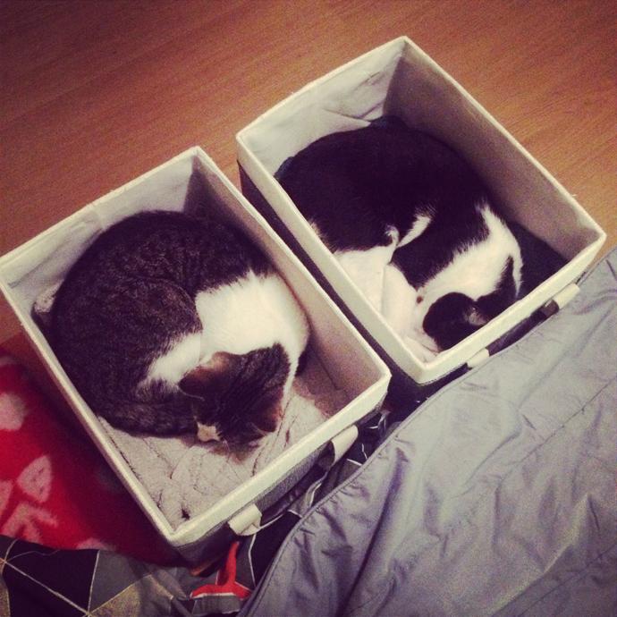 cat organiser