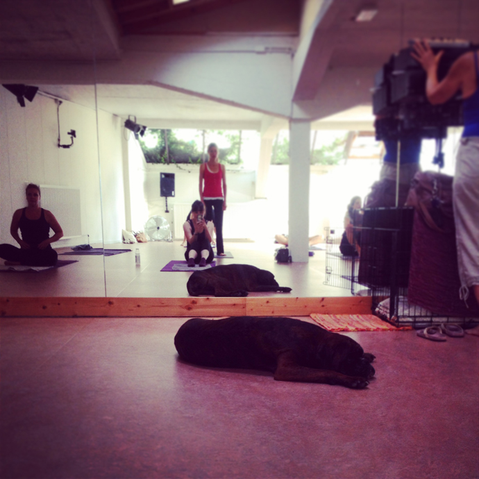 poweryoga hond