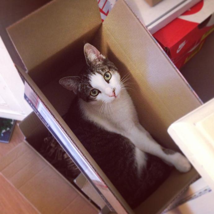 tetkees in een doos