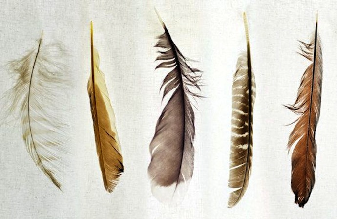 feathers_4
