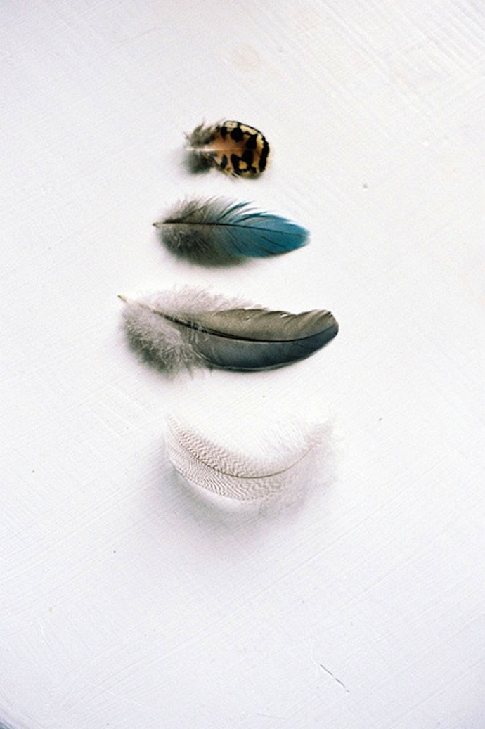 feathers_6