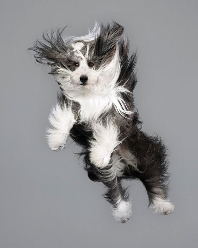 flying-dogs-julia-christe-1
