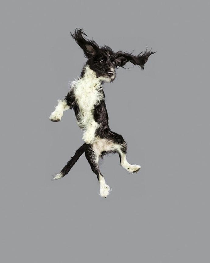 flying-dogs-julia-christe-2