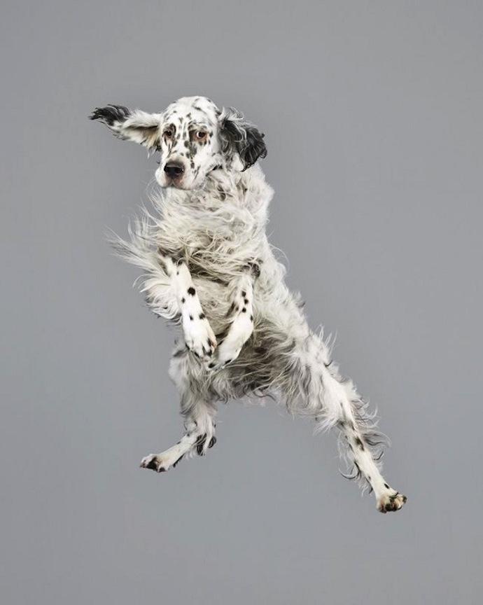 flying-dogs-julia-christe-3