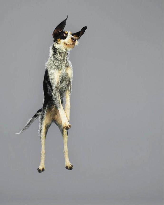 flying-dogs-julia-christe-4
