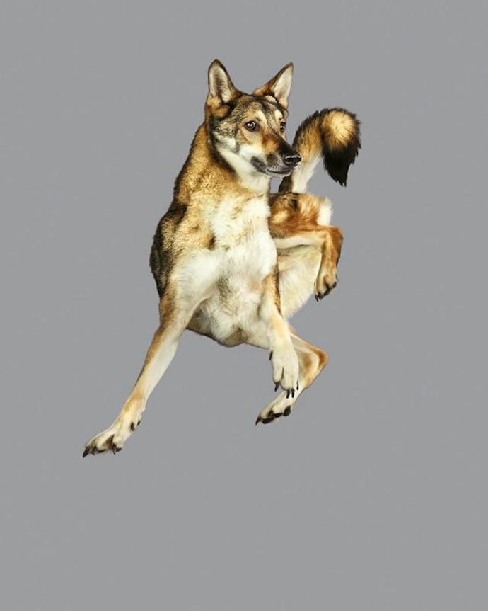flying-dogs-julia-christe-5
