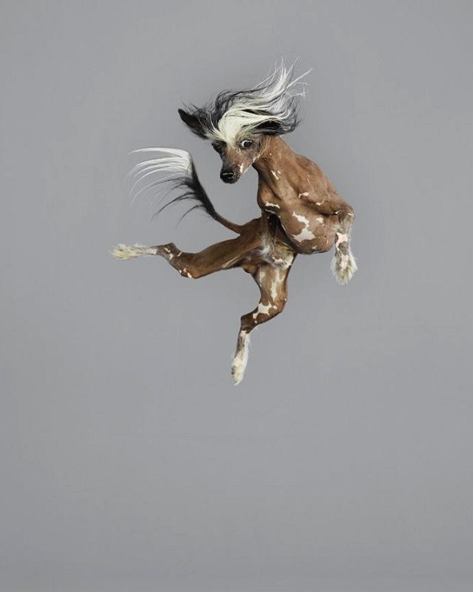 flying-dogs-julia-christe-6