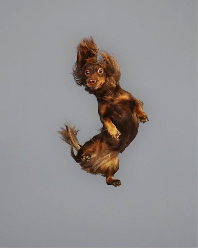 flying-dogs-julia-christe-7