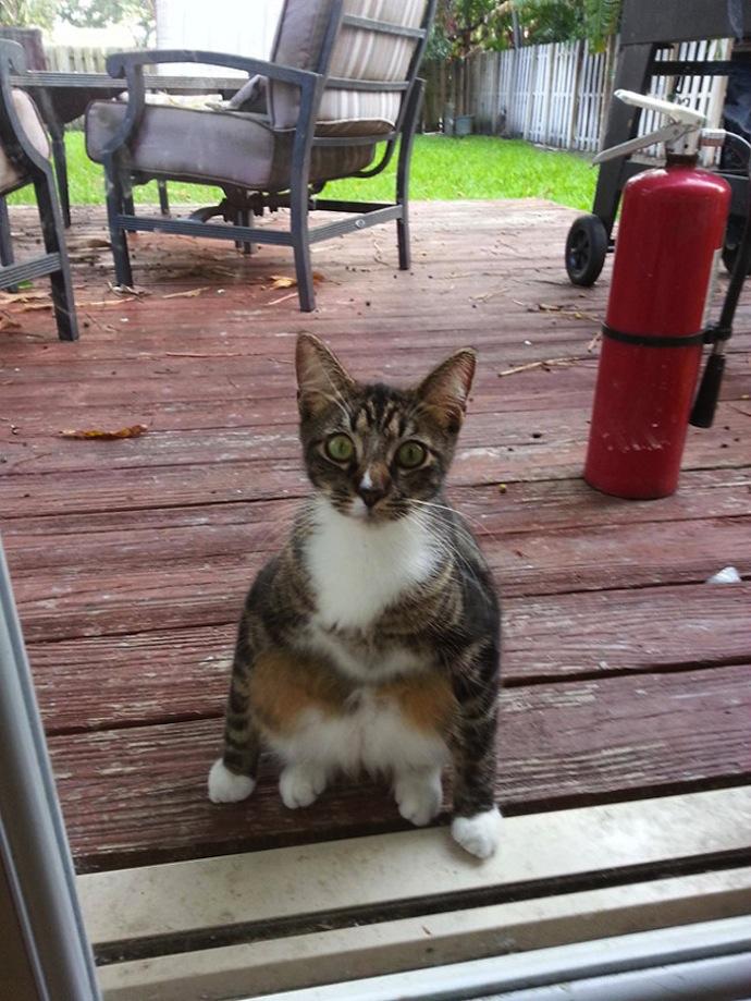 Awkwardly-sitting-cats-4