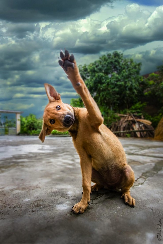 waving dog