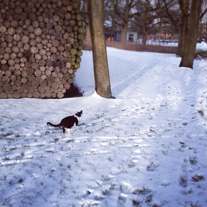 Mo sneeuw