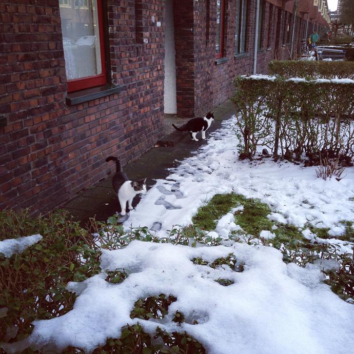 mo tetkees sneeuw