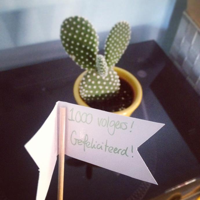 cactus 100 volgers