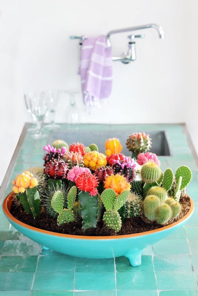 cactus bak