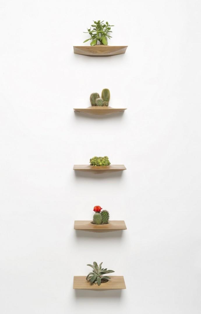 cactus plankje