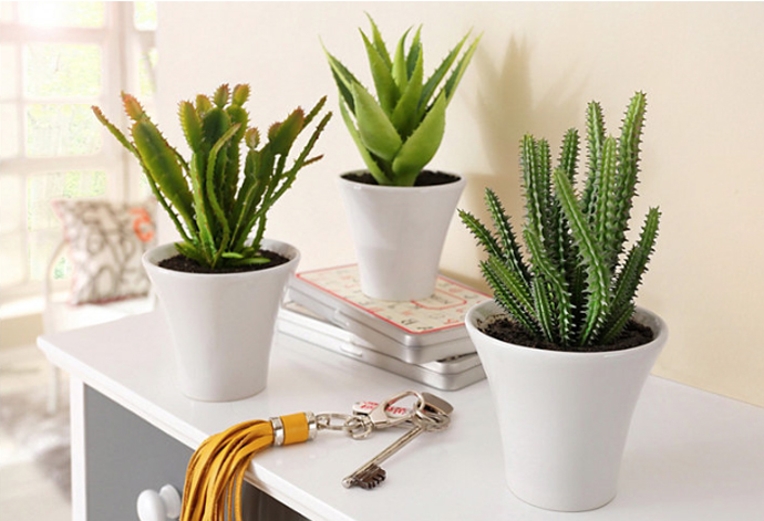 otto cactus