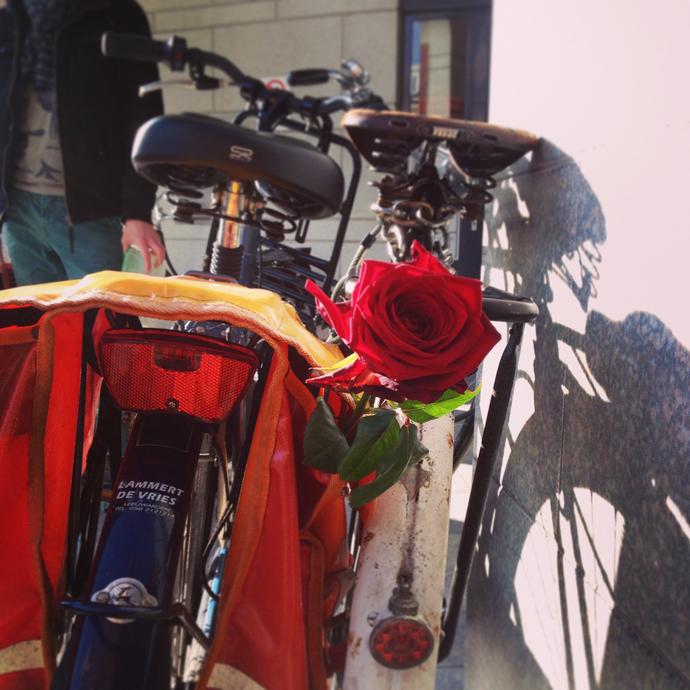 valentijns fiets roos