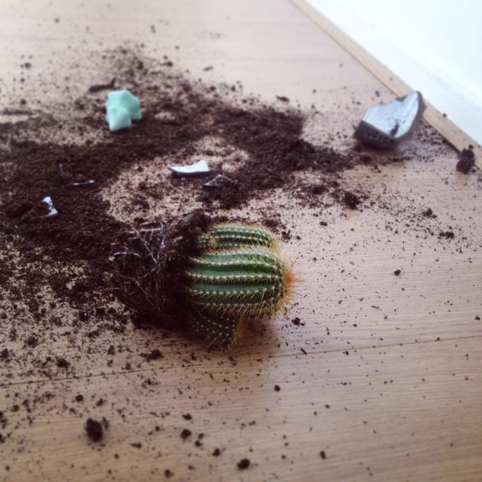 terrortetkees cactus