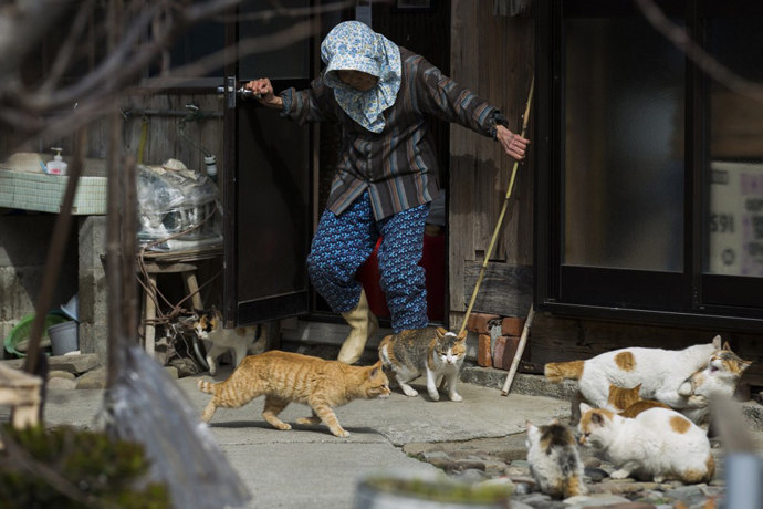 too many cats in Japan 2
