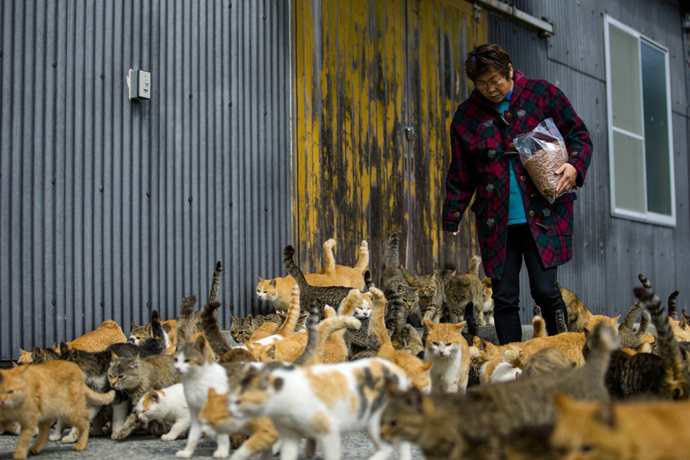 too many cats in Japan 3