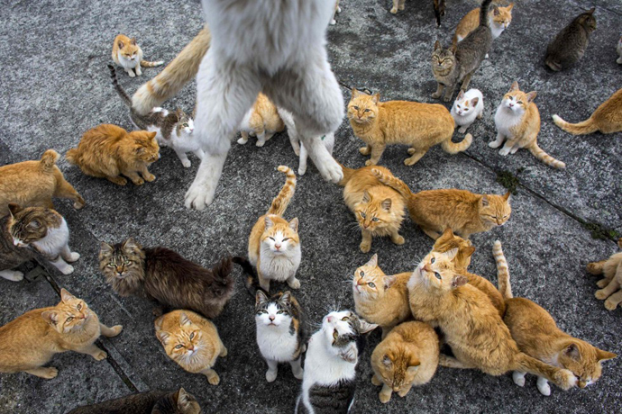 too many cats in Japan 5