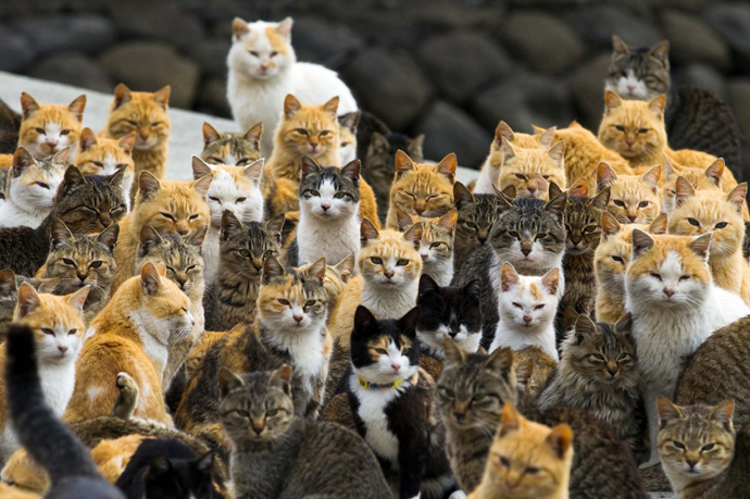 too many cats in Japan 6