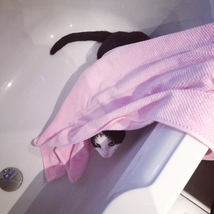 mo handdoek