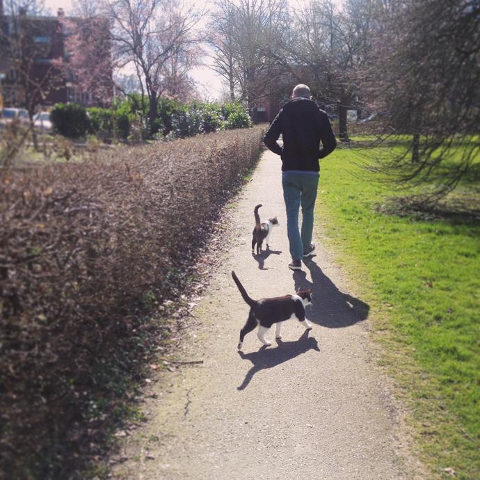 wandelen met de katten
