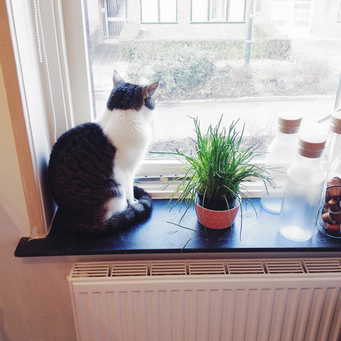 tetkees raam kijken