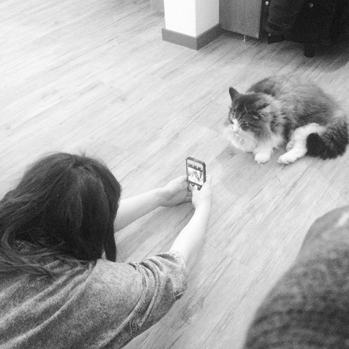 teske kattencafe