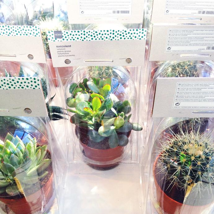hema cactus