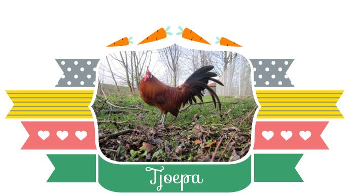 Tjoepa