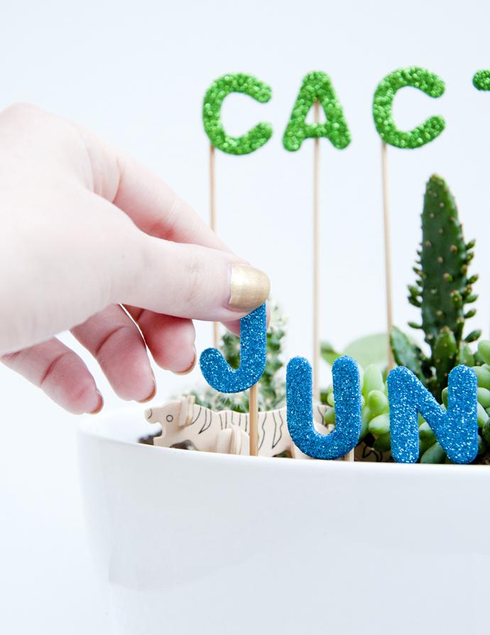 cactus jungle 3
