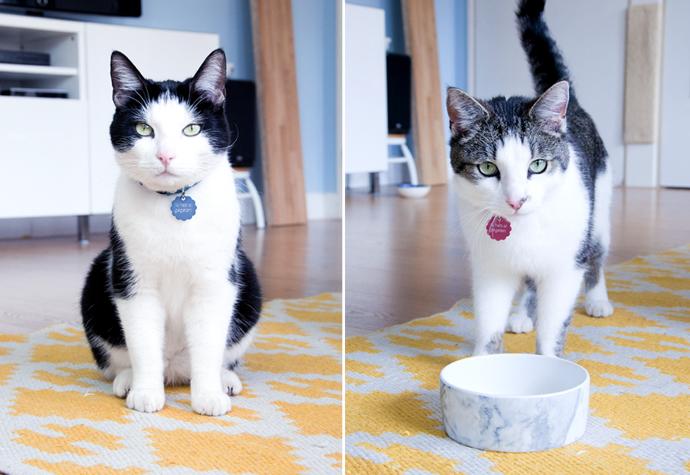 dubbel cats