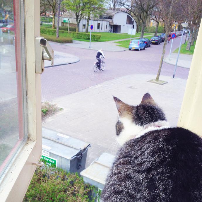 tetkees kijkt naar buiten