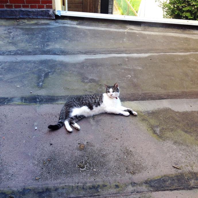 tetkees op het dak