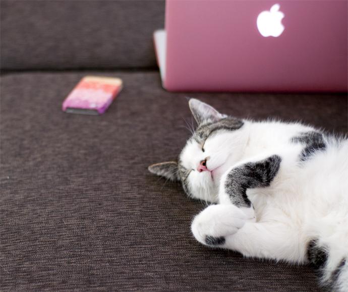 tetkees-laptop