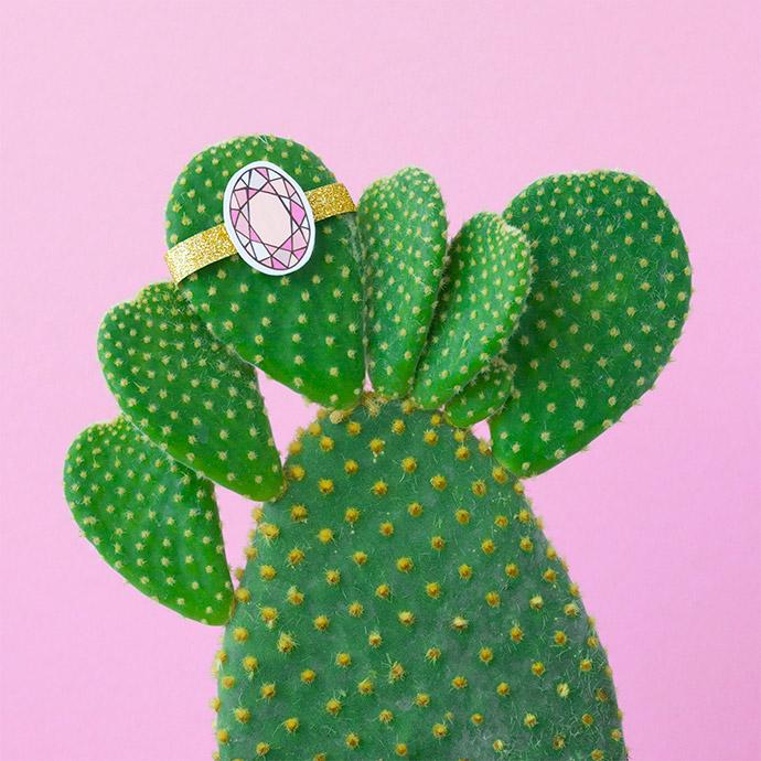 Gastblog2_Cactus